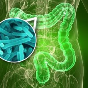 A flora intestinal age como um orgão do corpo humano (Foto: Divulgação)