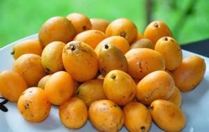 Cajá: Uma Fruta Exótica