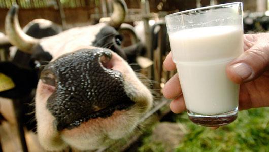 O leite de vaca não pode ser consumido sem ser pasteurizado, portanto para consumi-lo deve ser fervido (Foto: Divulgação)