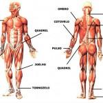 Fotos Corpo Humano - Anatomia Humana 16