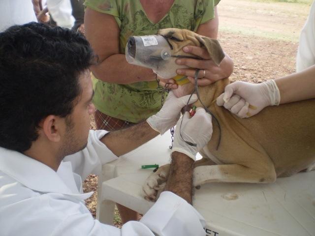 Animal recebendo tratamento contra a doença(foto de divulgação)
