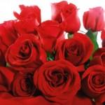 foto-rosa-vermelha1