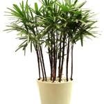 plantas-dentro-de-casa1
