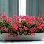 plantas-dentro-de-casa3