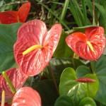 plantas-dentro-de-casa4
