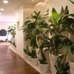 plantas-dentro-de-casa6