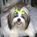 Fotos de cachorros de raça sempre são lindas (Foto: Divulgação)