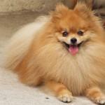 Fotos de cachorros de raça (Foto: Divulgação)
