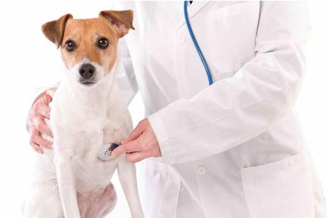 Agora existe também um hospital completo para atendimento gratuito ao seu pet em Tatuapé - SP. (Foto: Divulção)
