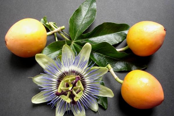 O Chá de Passiflora é um dos mais indicados para esse problema. Suas propriedades tratam não só a insônia, mas outros problemas que ajudam a afetar o humor da pessoa. (Foto: Reprodução)