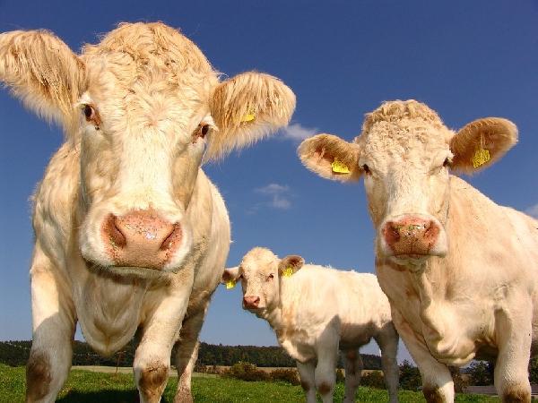 O Profissional formado em Agropecuária pode atuar nos cuidados com a saúde dos animais(Foto: Divulgação Pixabay)