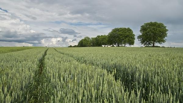 O agropecuarista também cuida da plantação e tudo que ela necessita  (Foto: Divulgação Pixabay)