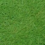 Tipos de grama para jardim – Dicas e idéias