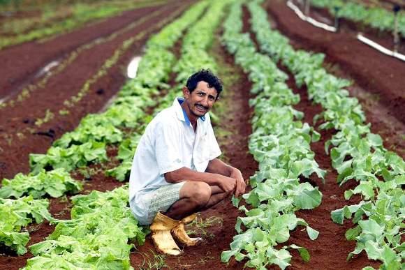 Existem programas que facilitam o crédito rural (Foto: Divulgação)