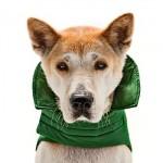 Roupas de Cachorros Grandes, Onde Comprar