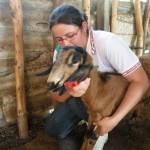 Técnico em Zootecnia, Curso de Zootecnia Gratuito 2011 em SP