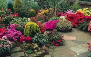 Plantas Ornamentais Para Jardins