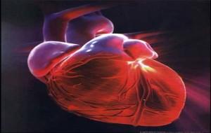 Como Prevenir Doenças Cardíacas