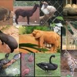 Excursões para o Zoológico de SP