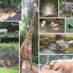 Zoológico de São Paulo Ingressos, Preços, Atrações