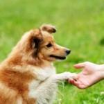 Curso de Adestramento de Cães Onde Fazer
