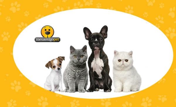 Franquia de Pet Shop 1