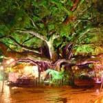 Lugares-Turisticos-em-Florianopolis-SC6