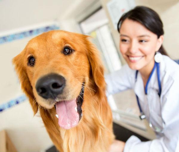 cuidado veterinario cachorro