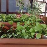 Horta em sua Casa – Como fazer
