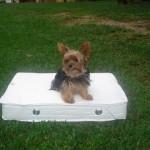 Colchões Terapêuticos para Cachorros