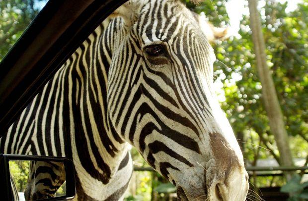 Tenha um contato próximo com os animais (Foto prefeitura de São Paulo)