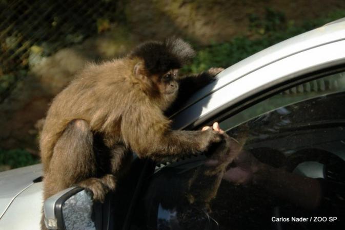 Simba Safari SP Localização, Horários, Preços (Foto: VEJA SP)