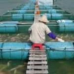Curso de Engenharia da Pesca