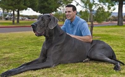 Cachorro enorme, fora do normal (Foto: Divulgação)