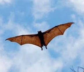 Animais Gigantes: Conheça os Bichos com Tamanho Fora do Normal - Morcego gigante (Foto: Divulgação)