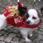 Roupinhas de cães para o Natal