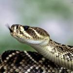 Cobra: saiba quais são os cuidados necessários para seu animal de estimação