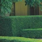 Cercas para jardim 6