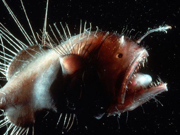Animal do fundo do mar  (Foto:Divulgação)