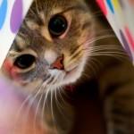 Gatinho se escondendo (Foto:Divulgação)