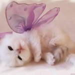 Gatinho Branco com asas de borboleta (Foto:Divulgação)