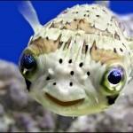 Peixinho Exótico (Foto:Divulgação)