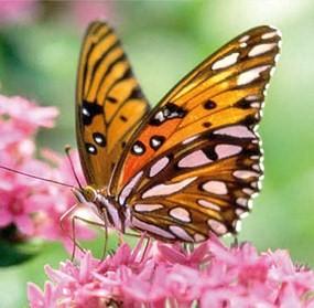 Borboleta em cima da flor (Foto:Divulgação)