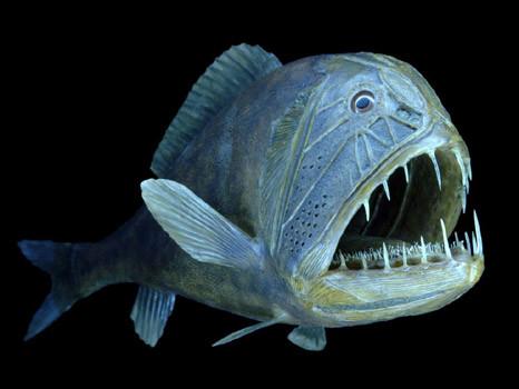 Peixe Abissal não enxerga nem diferencia a luz (Foto:Divulgação)