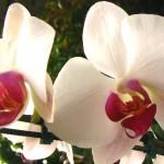 Orquídeas (Foto:Divulgação)