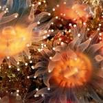 Anêmonas no fundo do mar (Foto:Divulgação)