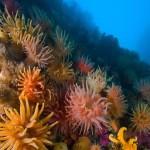 Anêmonas e corais (Foto:Divulgação)