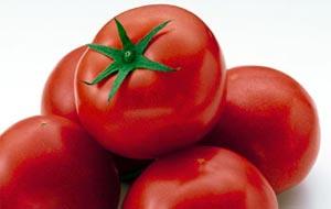 cardapio-tomate