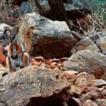 Nem as pedras foram impecilio para estes animais.