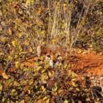 Na hora de caçar a camuflagem é de grande importância.